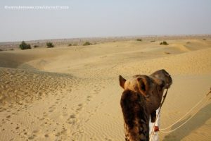 Thar Desert - Prince Desert camp - best desert camp in jaisalmer