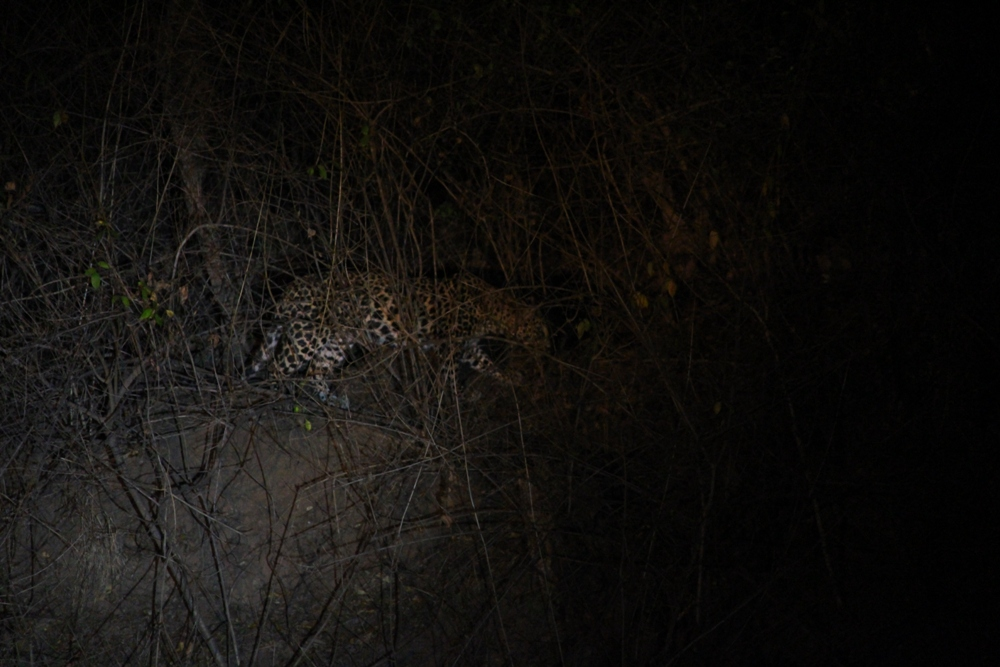 wildlife-and-birds-Satpura tiger reserve