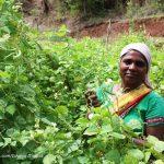 Fireflies and vegan meals in Purushwadi