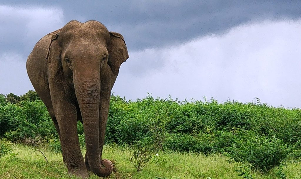 My guide to backpacking in Sri Lanka